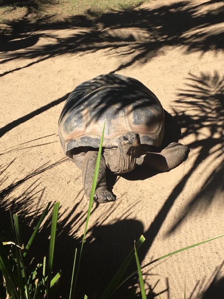 Tortoise- CuddleCare pss