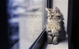 kitten at window- CuddleCare