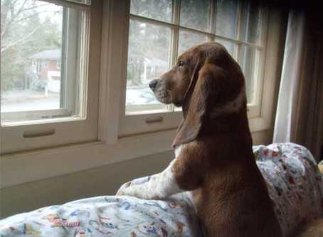 Separation Anxiety and Your Pet