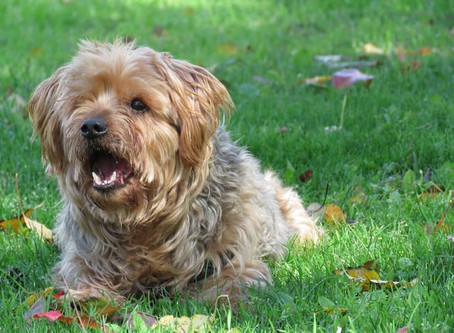 How to Teach your Dog to be Quiet in Social Situations