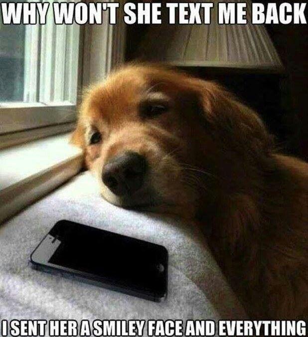 sad dog- CuddleCare