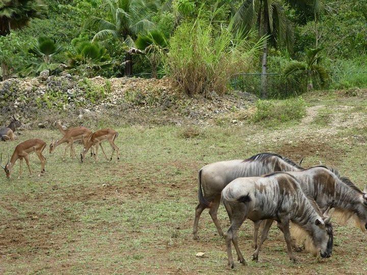 safari_park.JPG