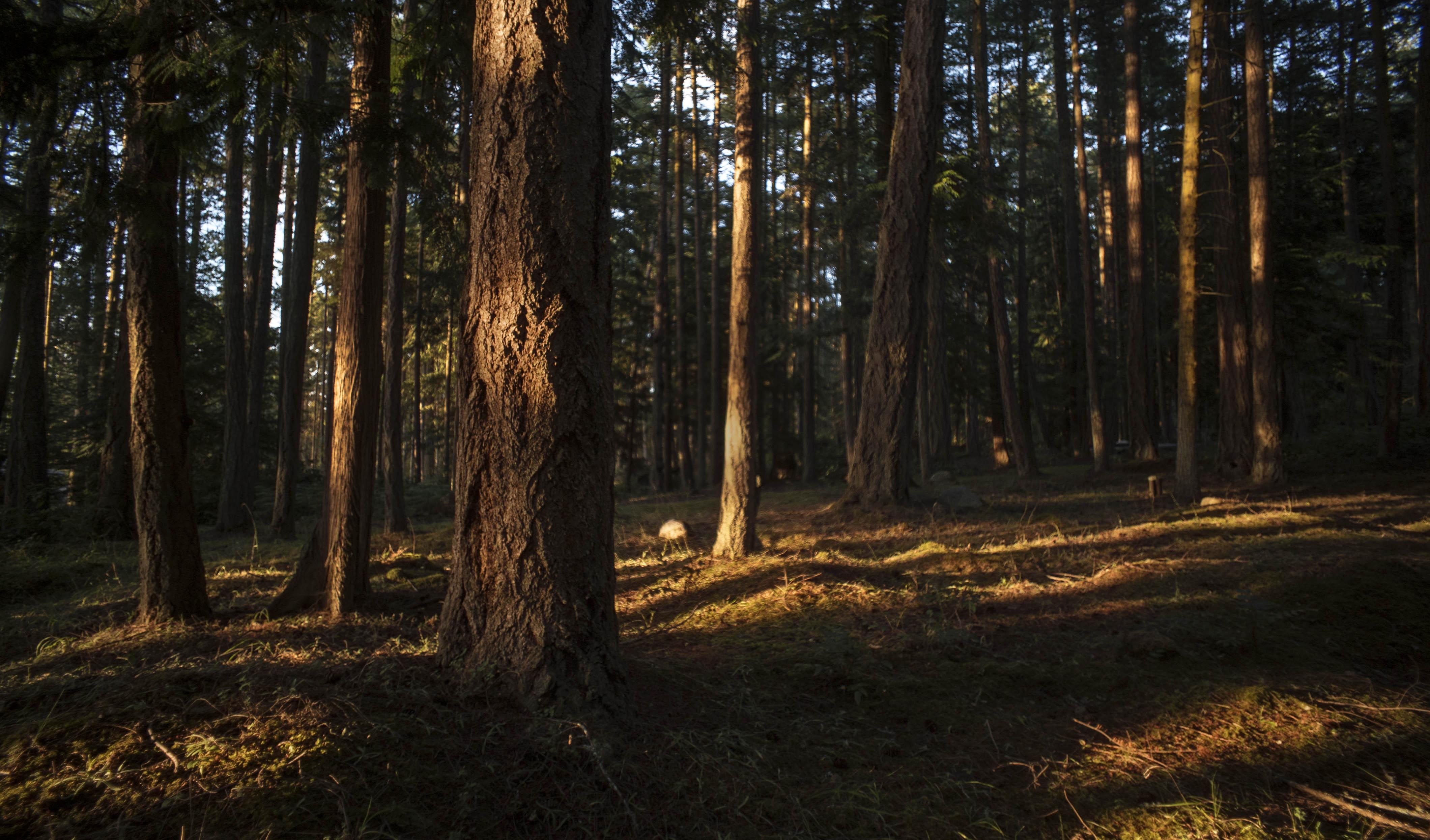Washington_woods