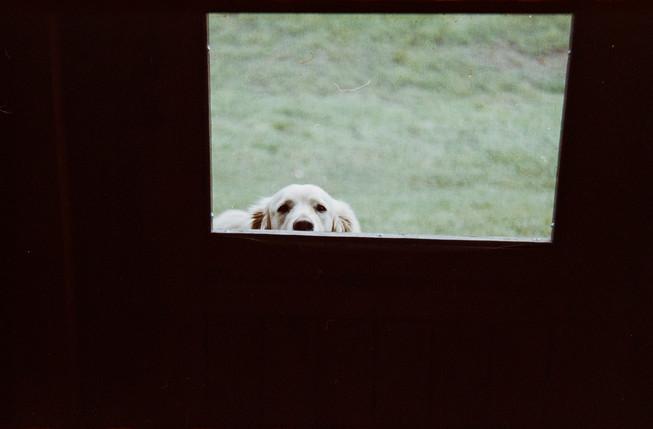 GRACIE_DOOR.jpg