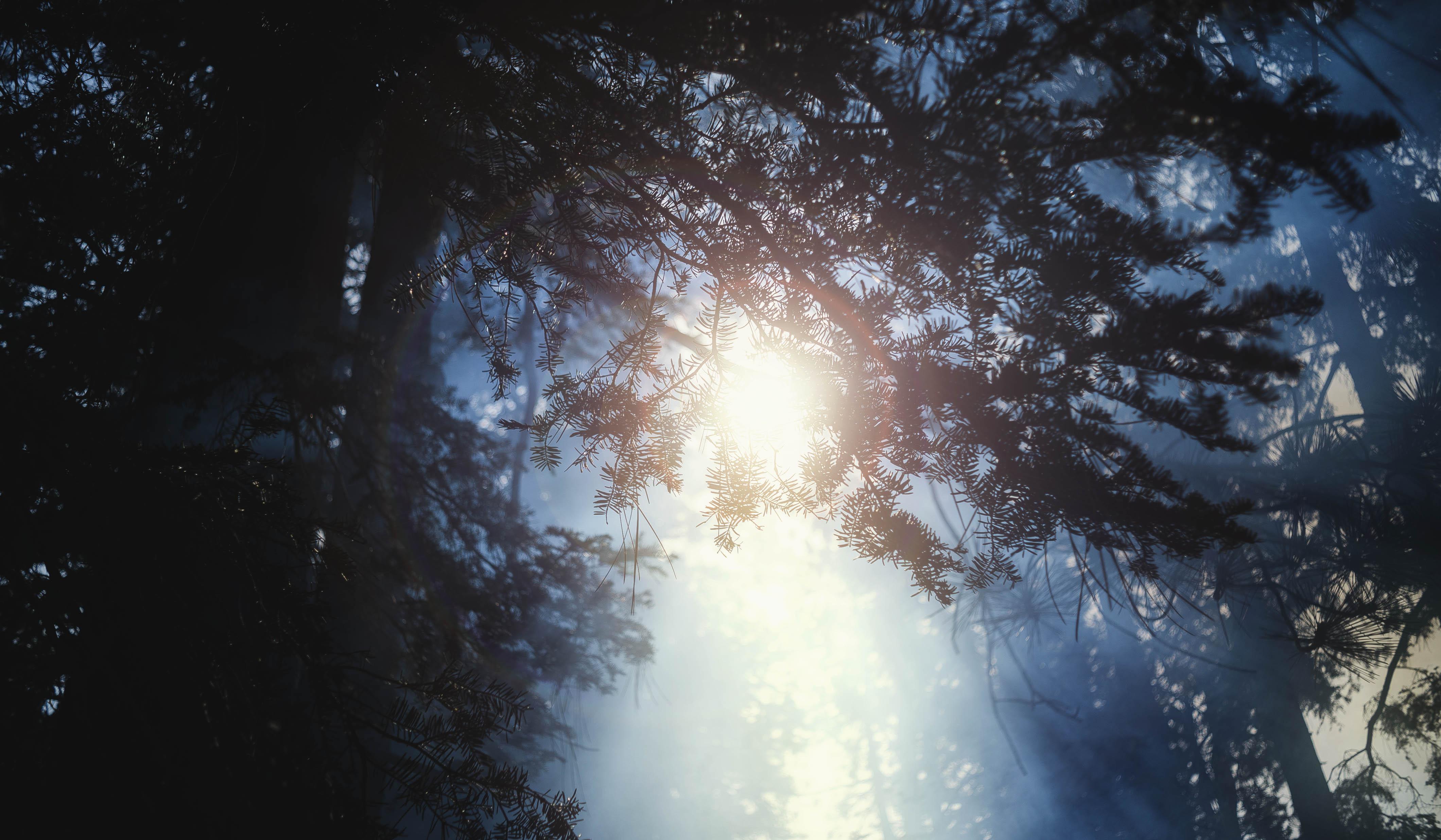 Smoke_and_Trees (1)