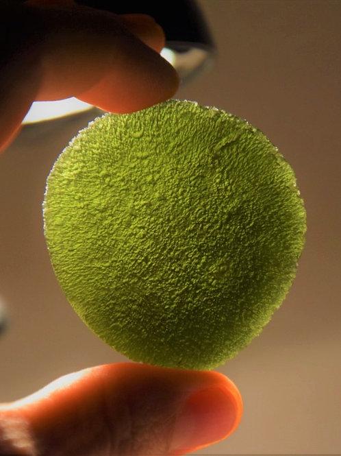 Moldavite 46,2g A+++