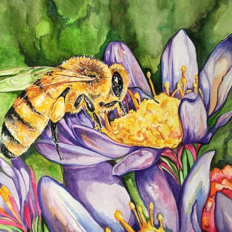 Utmost important pollinator