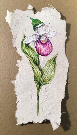 Lady Slipper on Asparagus paper
