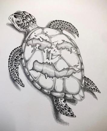 Sea Turtle Illustration
