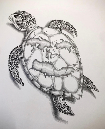 Sea Turtle Illustration