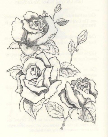Roses Illustration for Book