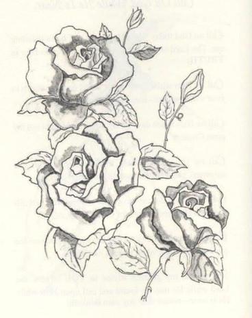 Roses Illustration for Book