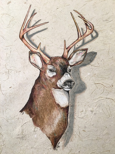 Deer on Asparagus paper