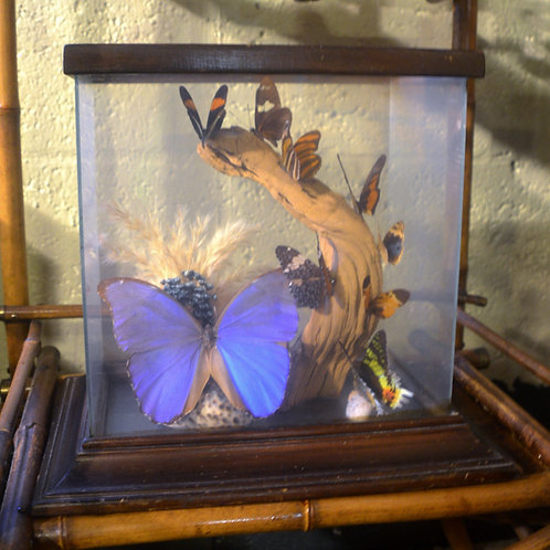 vintage butterfly vitrine