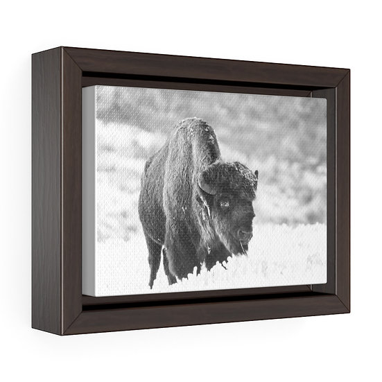 Canvas Print, Black and White Buffalo Canvas, Western Ranch Canvas Print, Above