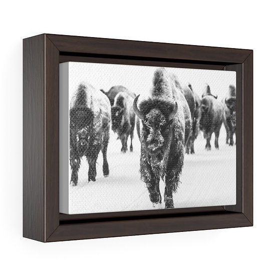 Canvas Print, Black and White Buffalo Herd Canvas, Western Ranch Canvas Print