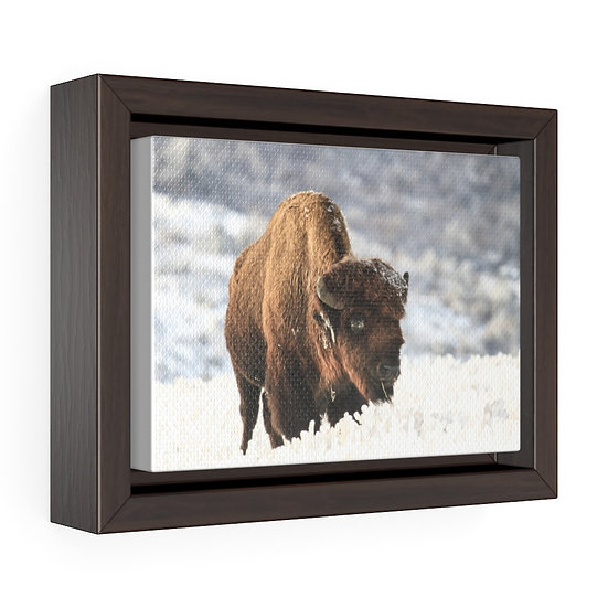 Canvas Print, Buffalo In Winter Canvas, Western Ranch Canvas Print, Wall Hanging