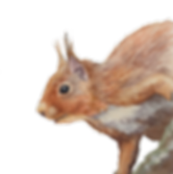 SquirrelCutoutPNG.png