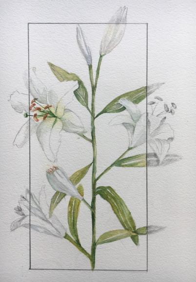 Lilies-ElfiD.jpg