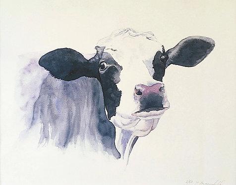 Freda Friesian Cow (P)