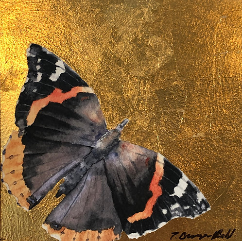 Red Admiral (P)