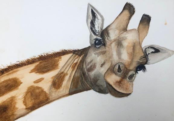 Giraffe-SallyD.jpg