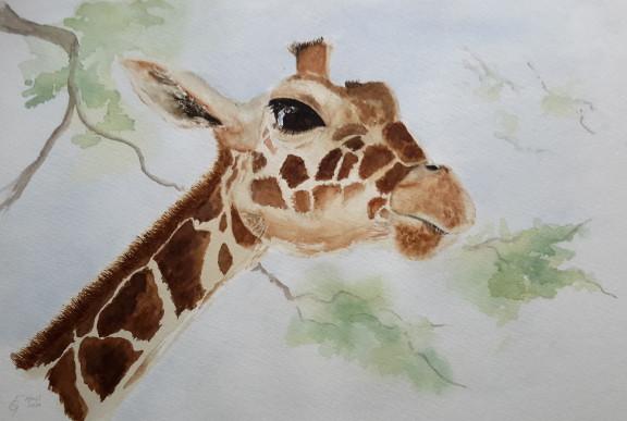 Giraffe-LibbyG.jpg