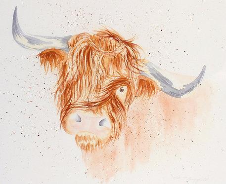Hamish Highland Cow (P)