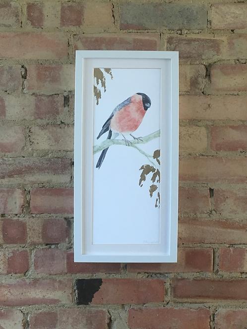 Burleigh Bullfinch (P)