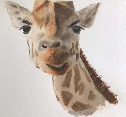 Giraffe-RhonaM.jpg
