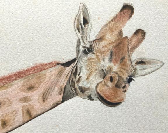 Giraffe-AlanK.jpg