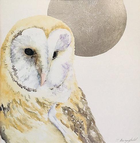 Betsy Barn Owl ~ Silver Moon (P)