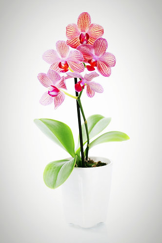 Anytime Orchids