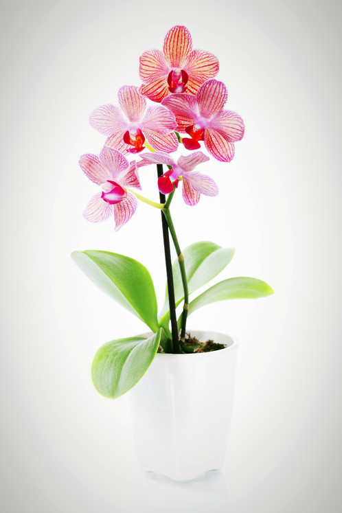 Anytime Orchids Florist Orlando Neu Blooms