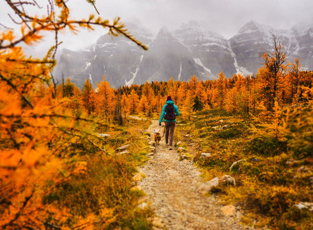 The Most Underrated Workout? Hiking