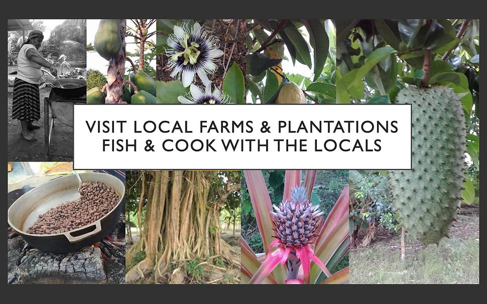 22.  VISIT LOCAL FARMS & PLANTATIONS.png