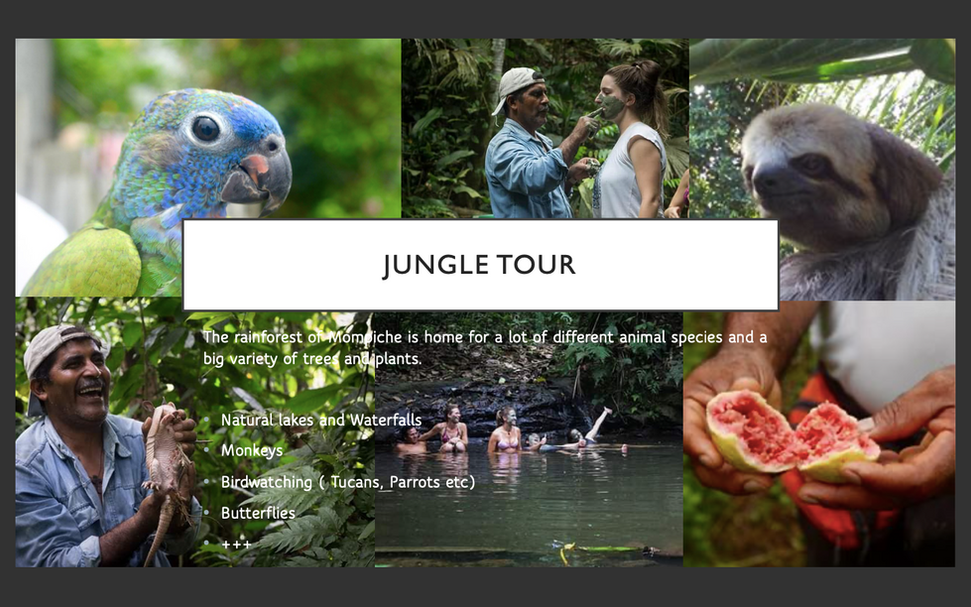 19. JUNGLE TOURS.png