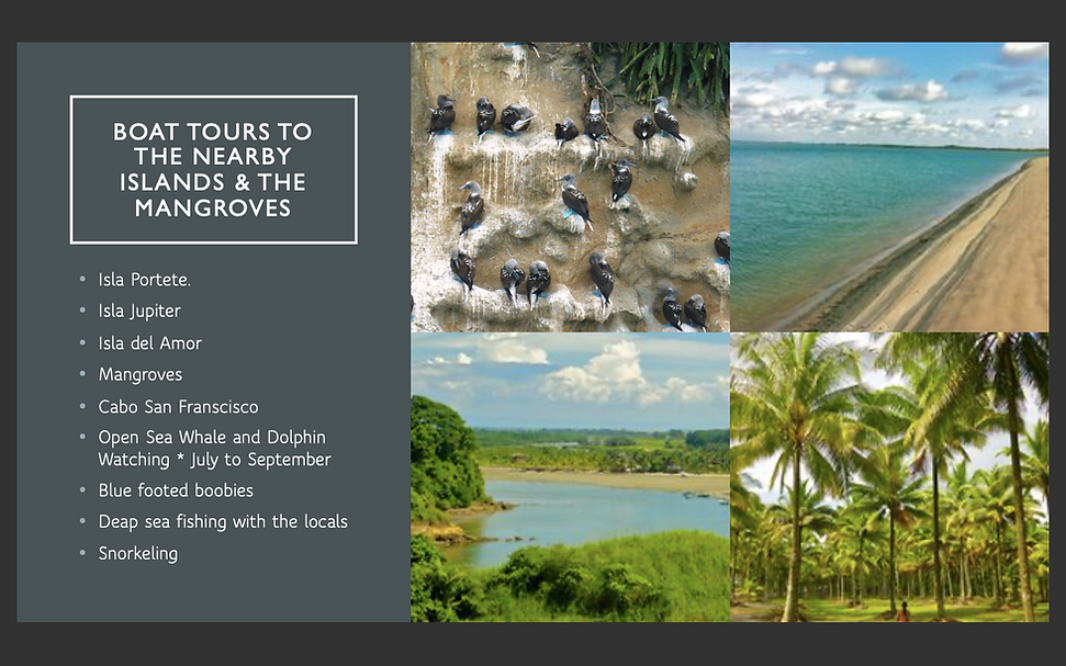 17. BOAT TOURS ISLANDS AND MANGROVES.png
