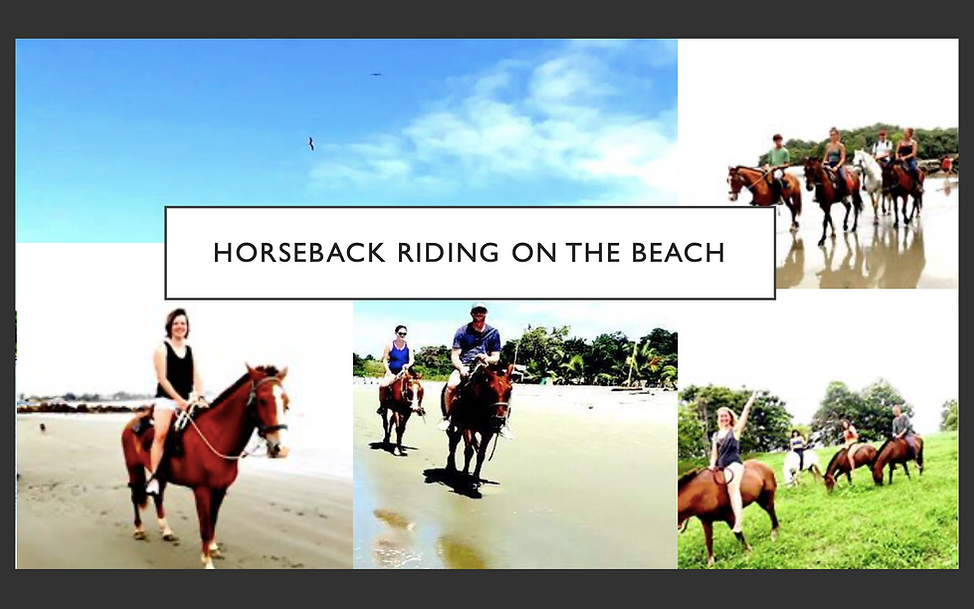 21. HORSE RIDE TOURS .png