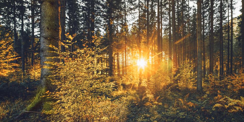 Naturerfahrung und Stille