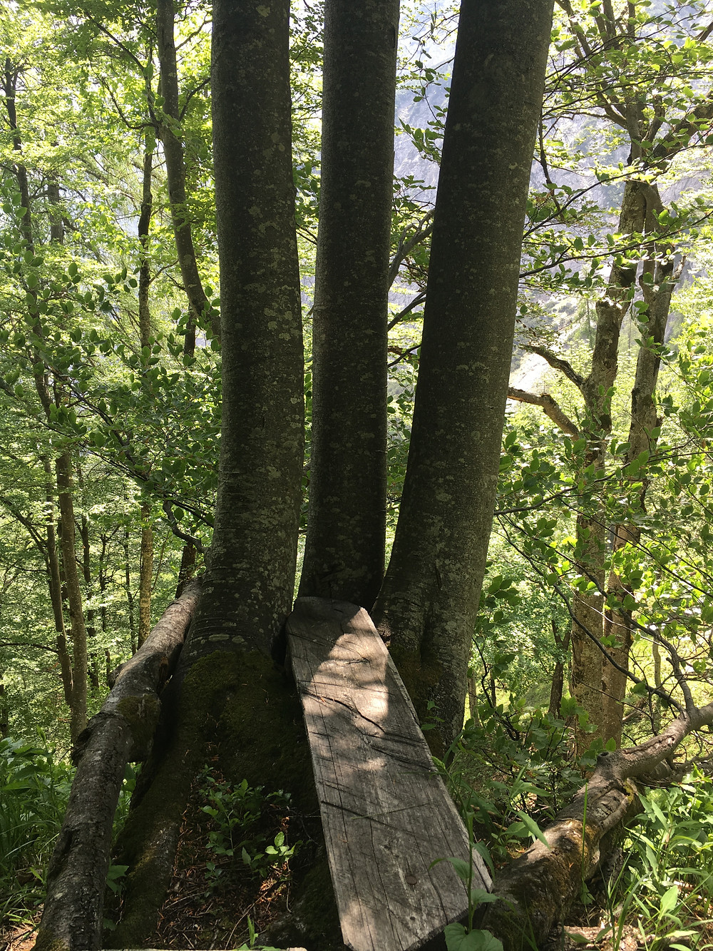 Geborgenheit an einem schönen Platz im Wald