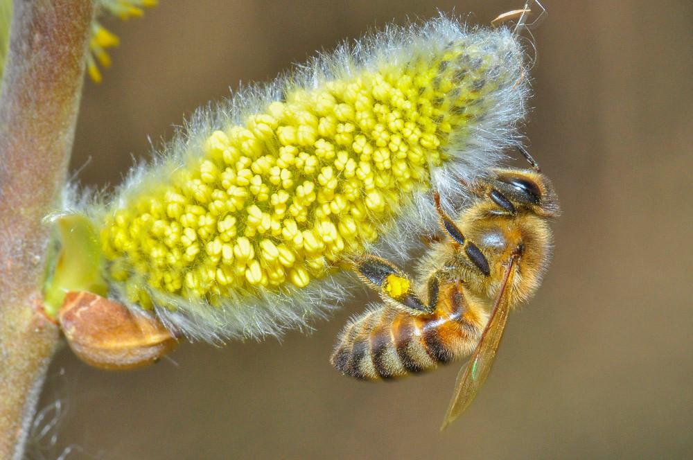 Fleissige Bienen als Symbol für Leistung als hoher Wert