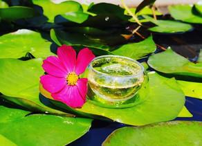 365 Teas Challenge > Day 220 - Gong Mei White Tea 2020