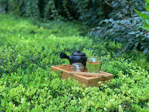 365 Teas Challenge > Day 238 - Bi Luo Chun
