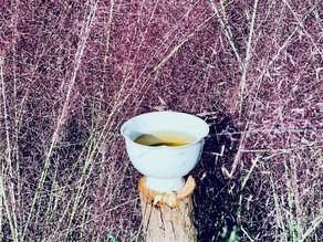 365 Teas Challenge > Day 265 - Floral Aroma Da Hong Pao (Big Red Rob)