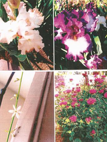 garden pictures-8.jpg