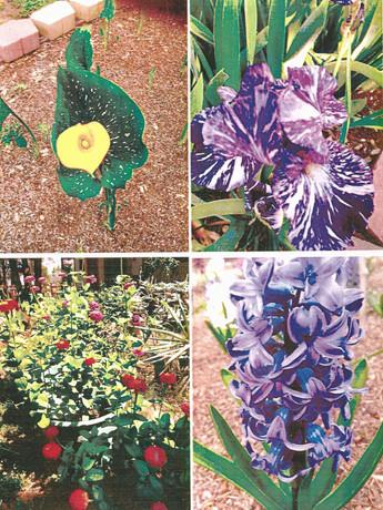 garden pictures-9.jpg