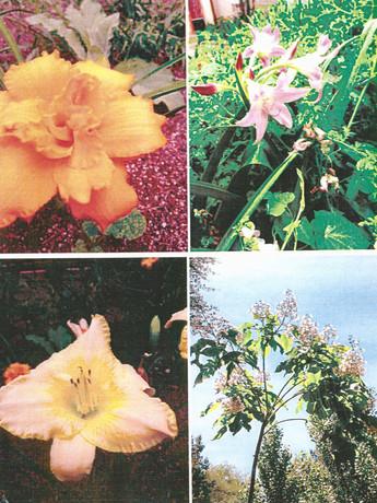 garden pictures-10.jpg