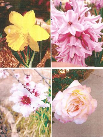 garden pictures-2.jpg