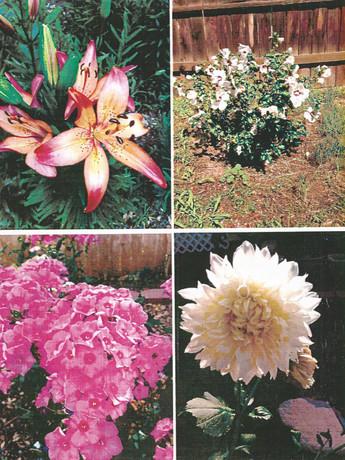 garden pictures-7.jpg